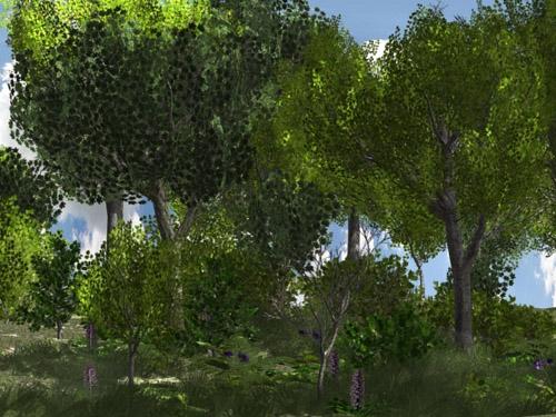 European Foliage and Trees 1