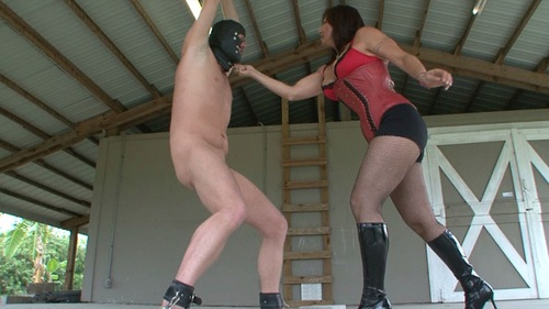 Ballbusting The Hanging Slave Female Domination