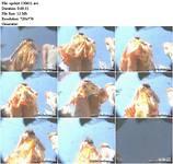 http://ist2-1.filesor.com/pimpandhost.com/9/3/6/8/93687/1/x/y/V/1xyVe/77ef7b272b6816bafc0e45200_0.jpg